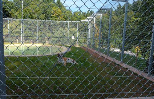 Tigergehege aus Maschendrahtzaun